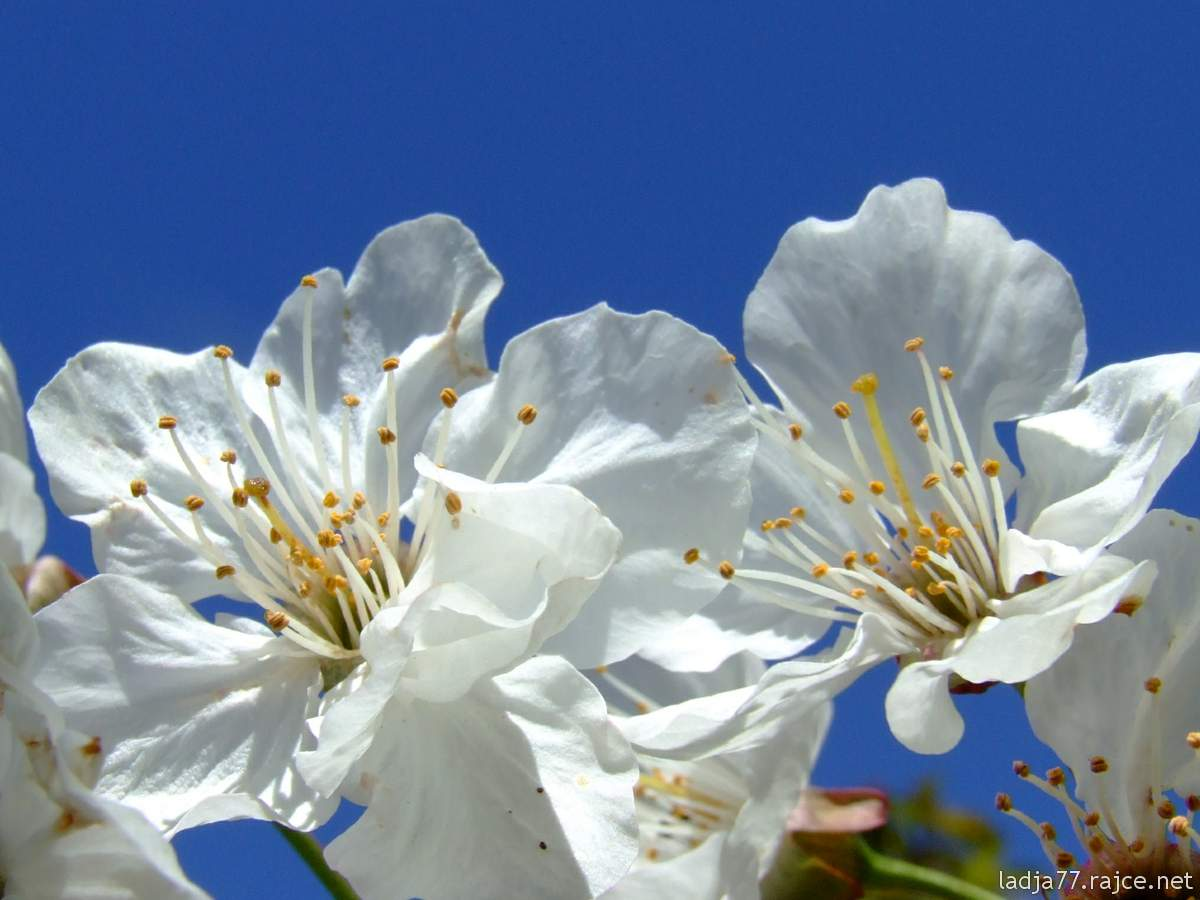 Ve dnech 1. a 8. května máme zavřeno. Přejeme krásné májové svátky.